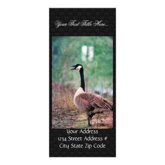 Canada goose rack card