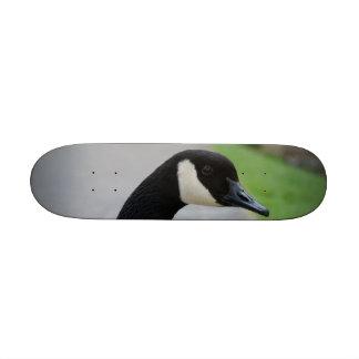 Canada goose skateboard