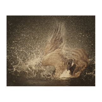 Canada Goose Slapping Water Photographic Art