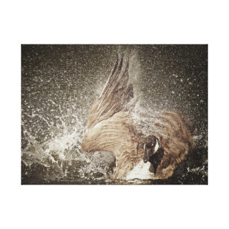 Canada Goose Slapping Water Photographic Art Canvas Print