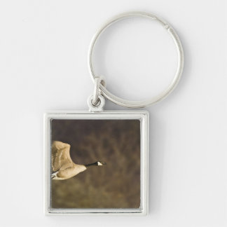 Canada Goose takes off for flight in wetlands Keychain