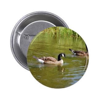 Canada goose trio on Goose Lake, Anchorage Pins