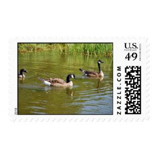 Canada goose trio on Goose Lake, Anchorage Stamps