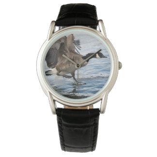 Canada Goose Watch