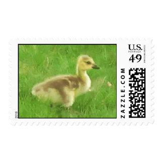 Canada Gosling Postage Stamp
