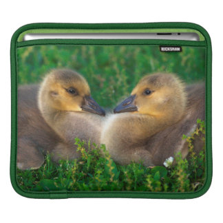 Canada Goslings that form a heart Sleeve For iPads