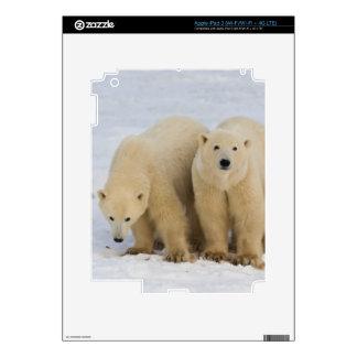 Canada, Hudson Bay. Polar bear mother with two iPad 3 Skin