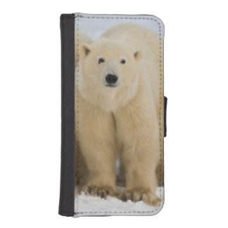 Canada, Hudson Bay. Polar bear mother with two iPhone SE/5/5s Wallet