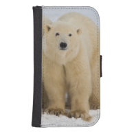 Canada, Hudson Bay. Polar bear mother with two Galaxy S4 Wallet Cases