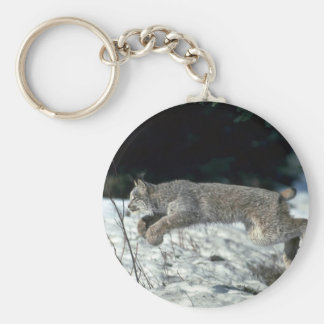 Canada lynx leaping, bounding on snow keychains
