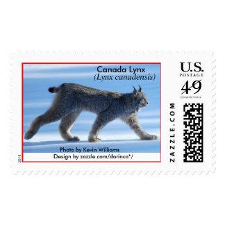 Canada Lynx (Lynx canadensis) 1a Postage Stamp