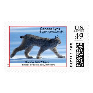 Canada Lynx (Lynx canadensis) 1b Postage Stamp