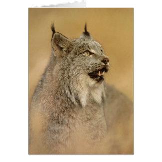 Canada Lynx (Lynx canadensis) - Wild Cats Card