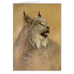 Canada Lynx (Lynx canadensis) - Wild Cats Cards