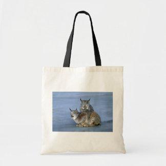 Canada lynx winter pair by icy stream bag