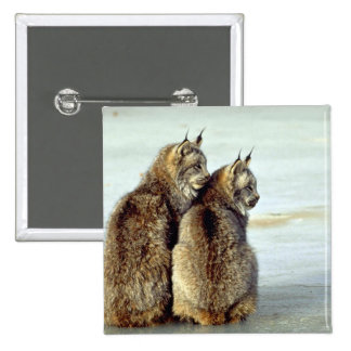 Canada lynx winter pair by icy stream pinback buttons