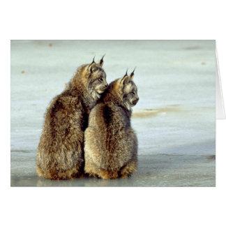 Canada lynx winter pair by icy stream greeting card