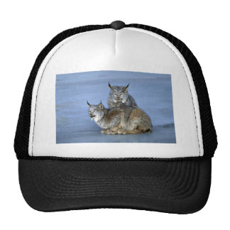 Canada lynx winter pair by icy stream mesh hats