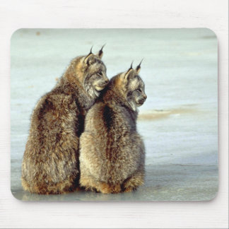 Canada lynx winter pair by icy stream mouse pad
