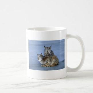 Canada lynx winter pair by icy stream mugs