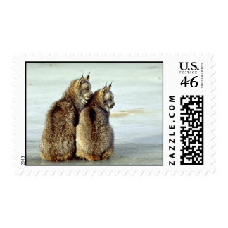 Canada lynx winter pair by icy stream postage stamps