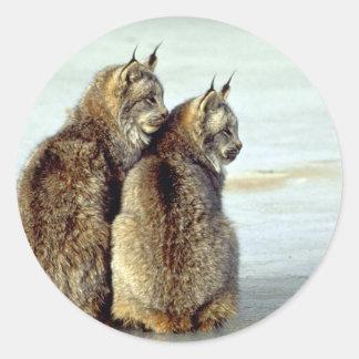 Canada lynx winter pair by icy stream sticker