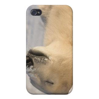 Canadá, Manitoba, Bahía de Hudson, Churchill. 3 iPhone 4/4S Fundas