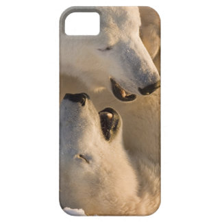 Canadá, Manitoba, Bahía de Hudson, Churchill. 4 Funda Para iPhone 5 Barely There