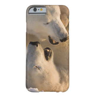 Canadá, Manitoba, Bahía de Hudson, Churchill. 4 Funda Para iPhone 6 Barely There
