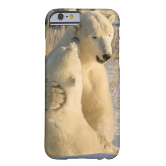 Canadá, Manitoba, Bahía de Hudson, Churchill. Funda Para iPhone 6 Barely There