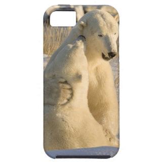 Canadá, Manitoba, Bahía de Hudson, Churchill. iPhone 5 Funda