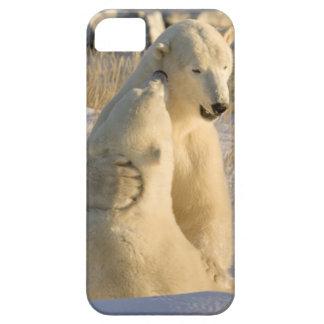 Canadá, Manitoba, Bahía de Hudson, Churchill. iPhone 5 Fundas