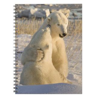 Canadá, Manitoba, Bahía de Hudson, Churchill. Libros De Apuntes