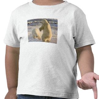 Canadá, Manitoba, Bahía de Hudson, Churchill. Camisetas