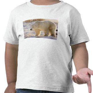 Canadá, Manitoba, Bahía de Hudson, Churchill. Por Camisetas