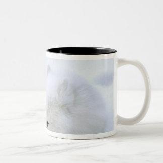 Canada, Manitoba, Churchill. Artic fox with Mugs