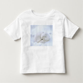 Canada, Manitoba, Churchill. Artic fox with T Shirt