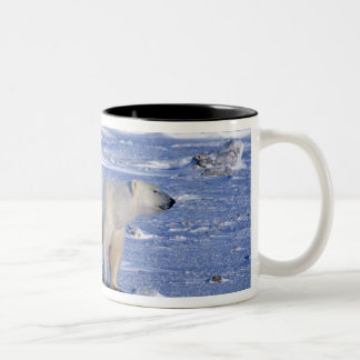 Canada, Manitoba, Churchill. Polar bear mother Coffee Mugs