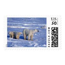 Canada, Manitoba, Churchill. Polar bear mother Postage