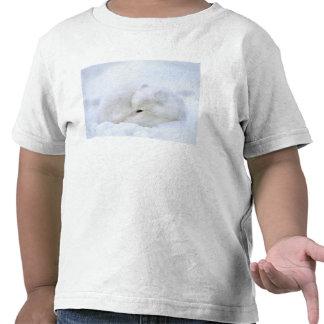 Canadá, Manitoba, Churchill. Zorro ártico con Camisetas