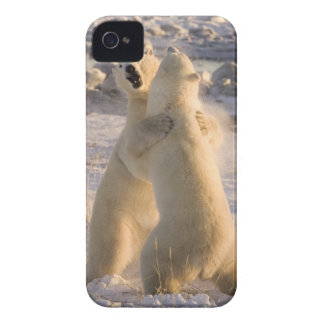 Canada, Manitoba, Hudson Bay, Churchill. 2 iPhone 4 Covers