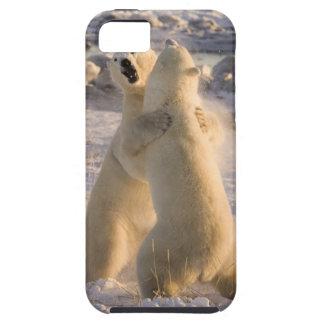 Canada, Manitoba, Hudson Bay, Churchill. 2 iPhone 5 Covers
