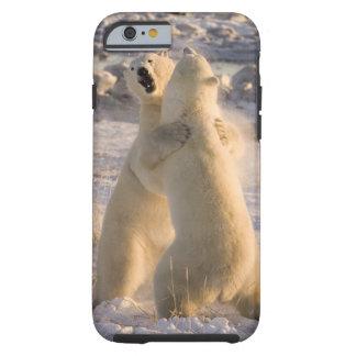 Canada, Manitoba, Hudson Bay, Churchill. 2 Tough iPhone 6 Case