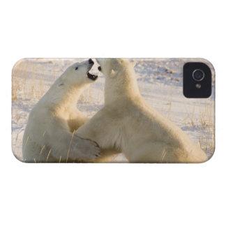 Canada, Manitoba, Hudson Bay, Churchill. 3 iPhone 4 Cover