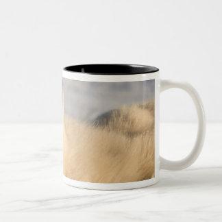 Canada, Manitoba, Hudson Bay, Churchill. 3 Mug