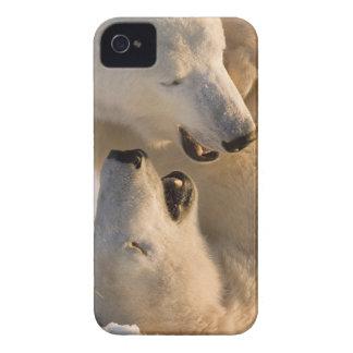 Canada, Manitoba, Hudson Bay, Churchill. 4 Case-Mate iPhone 4 Cases