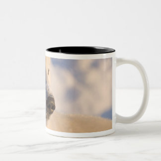 Canada, Manitoba, Hudson Bay, Churchill. 4 Coffee Mug
