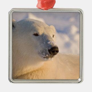 Canada, Manitoba, Hudson Bay, Churchill. 4 Square Metal Christmas Ornament