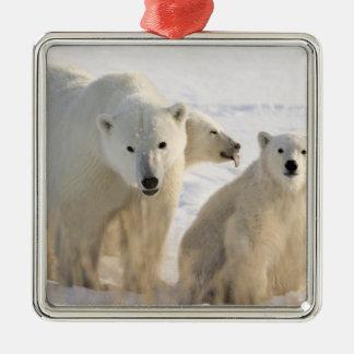 Canada, Manitoba, Hudson Bay, Churchill. 5 Metal Ornament