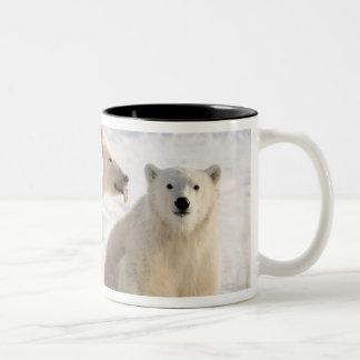 Canada, Manitoba, Hudson Bay, Churchill. 5 Coffee Mugs
